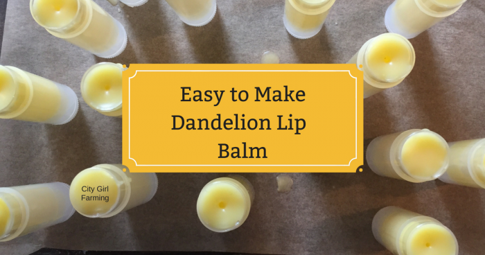 Dandelion season is short and yet there are so many good things to make with dandelions--dandelion lip balm is one of them. This recipe is both easy and fun to make and the results work and taste great!