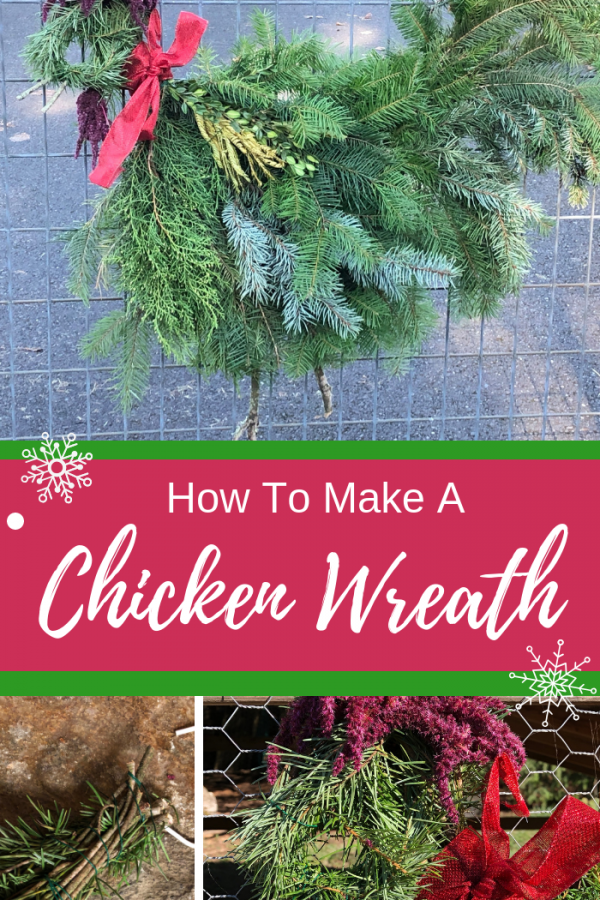 Make a Chicken Holiday Wreath