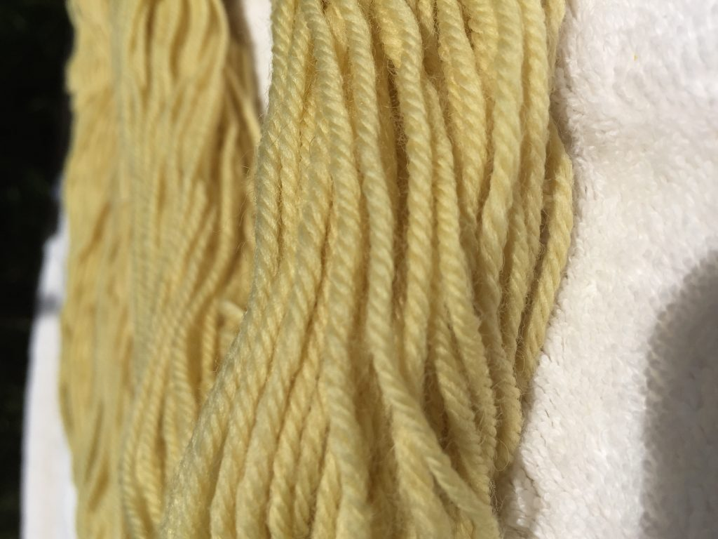 dandelion dyed wool yarn