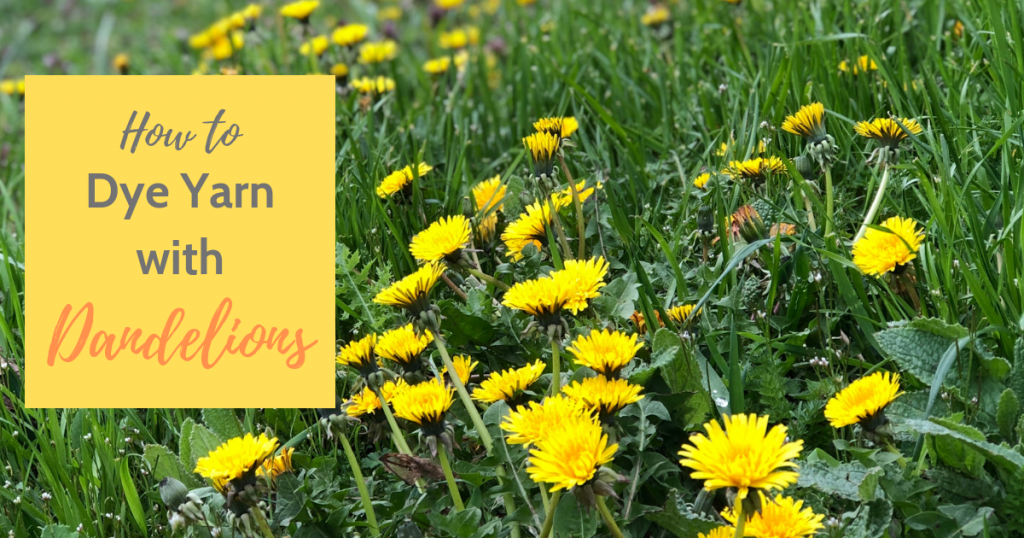 Learn how to dye yarn with dandelions in 4 simple steps and just 3 ingredients.